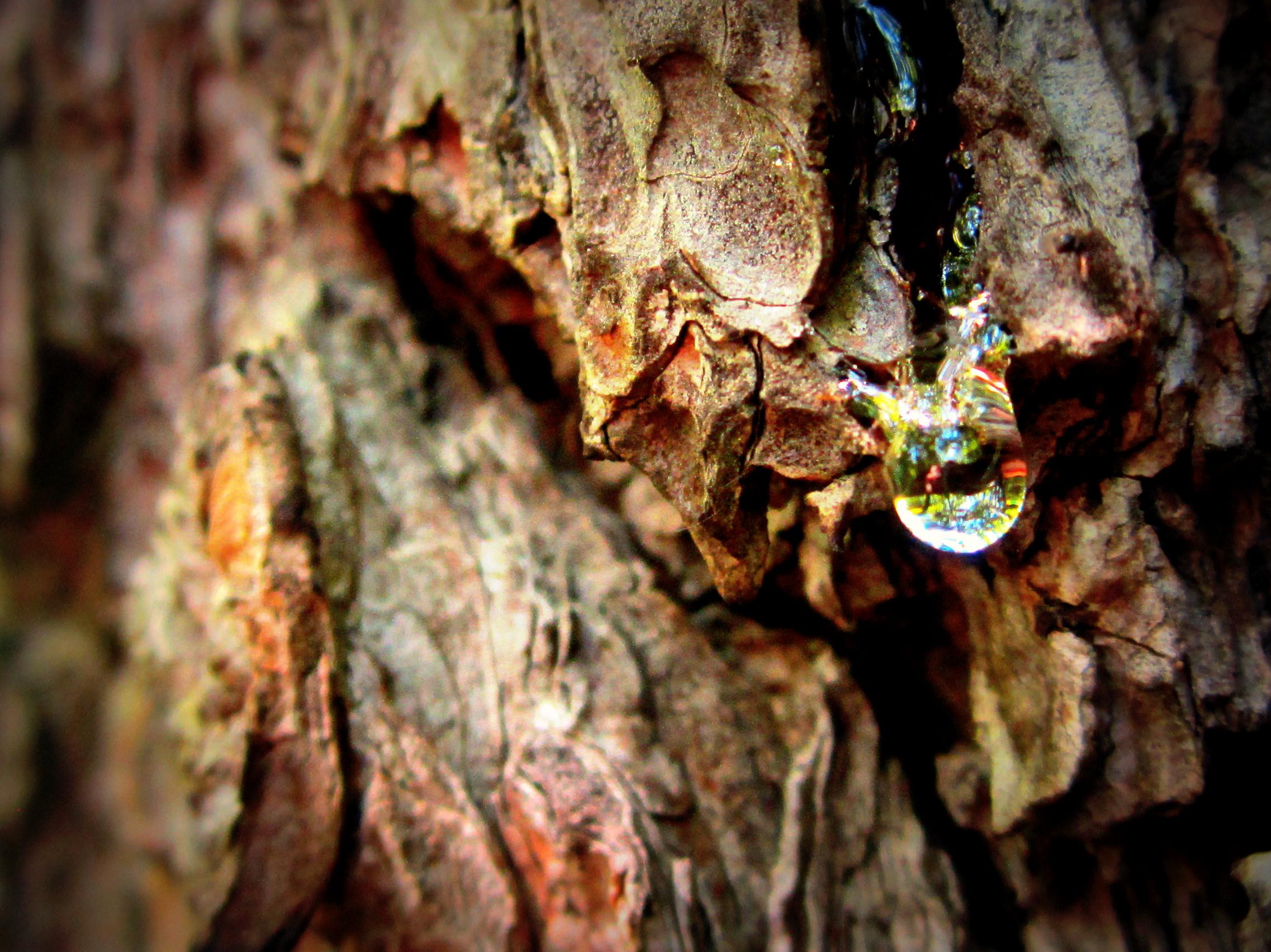 Winning Photography Nature Sapdonner